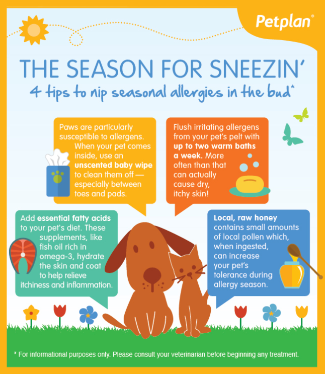 Pin On Pet Health Care Infographics