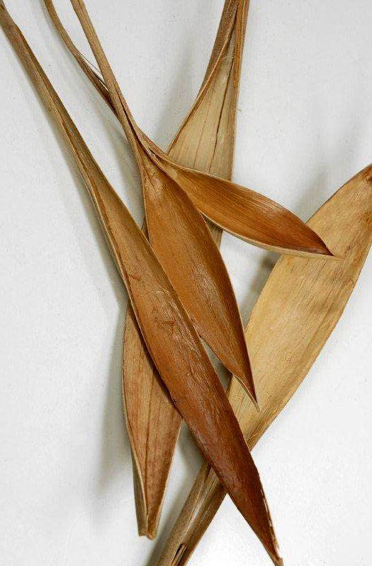 Palms Natural Dried Preserved Artificial Fronds Crafting