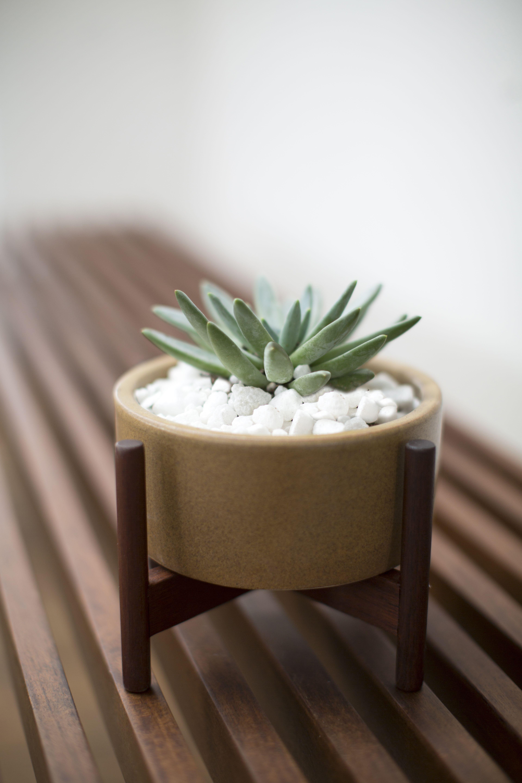 Modernica Case Study Ceramics Desk Top Cylinder W Stand Acorn