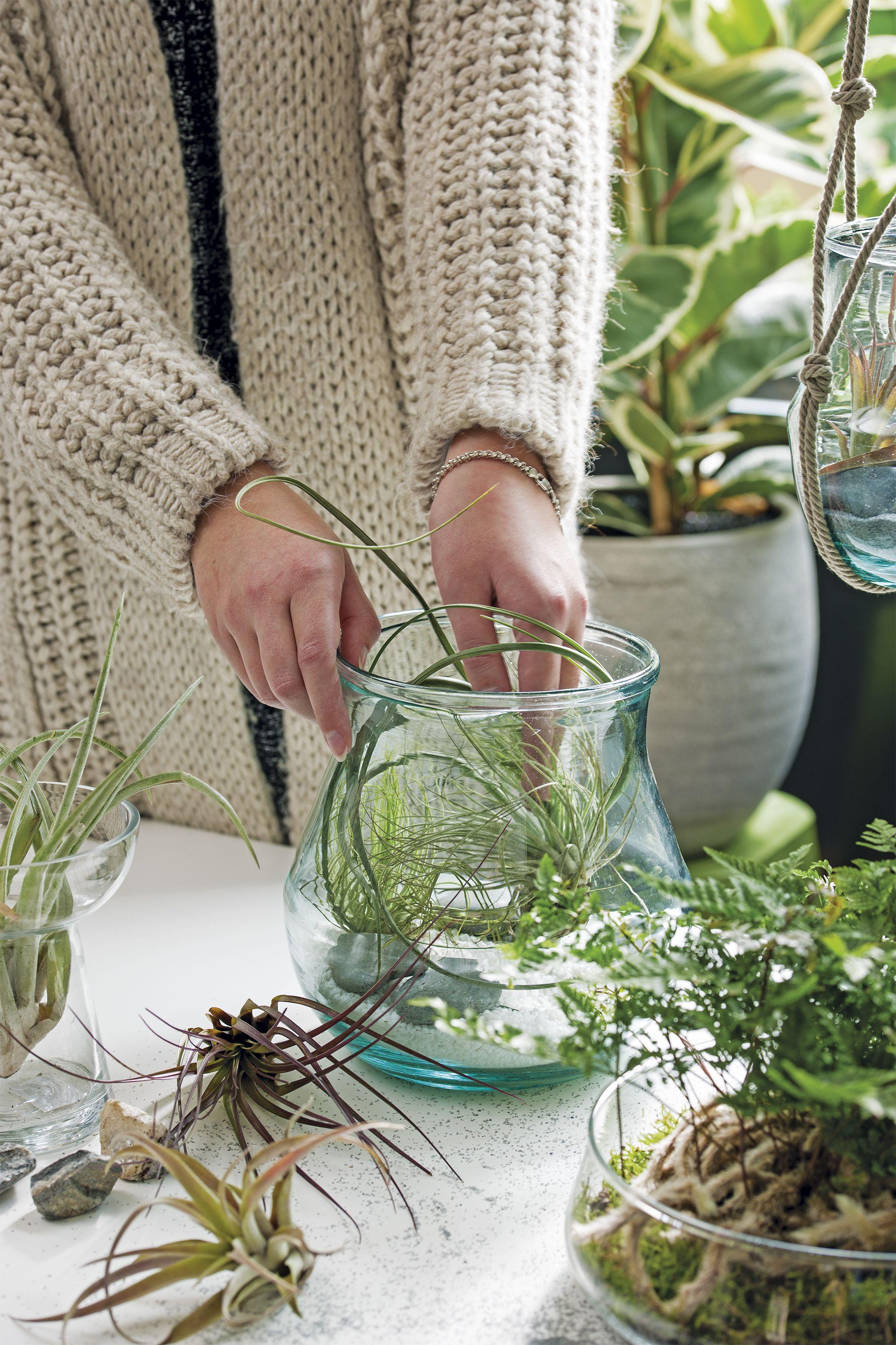 Plant In Glazen Vaas.Zet Een Plantje In Een Glazen Vaas Groenwonen Kamerplanten