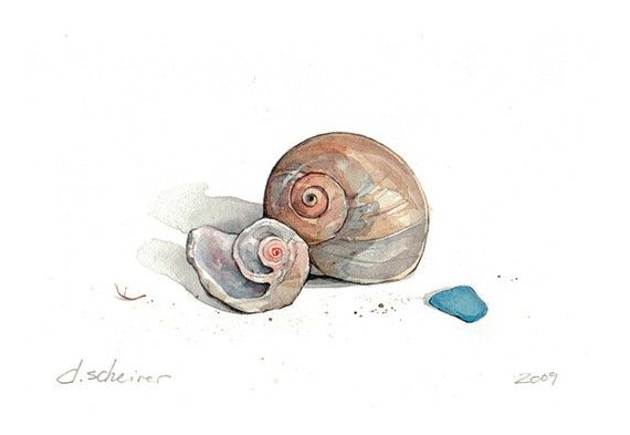 Moon Snail Shells Watercolor Print by studiotuesday on Etsy