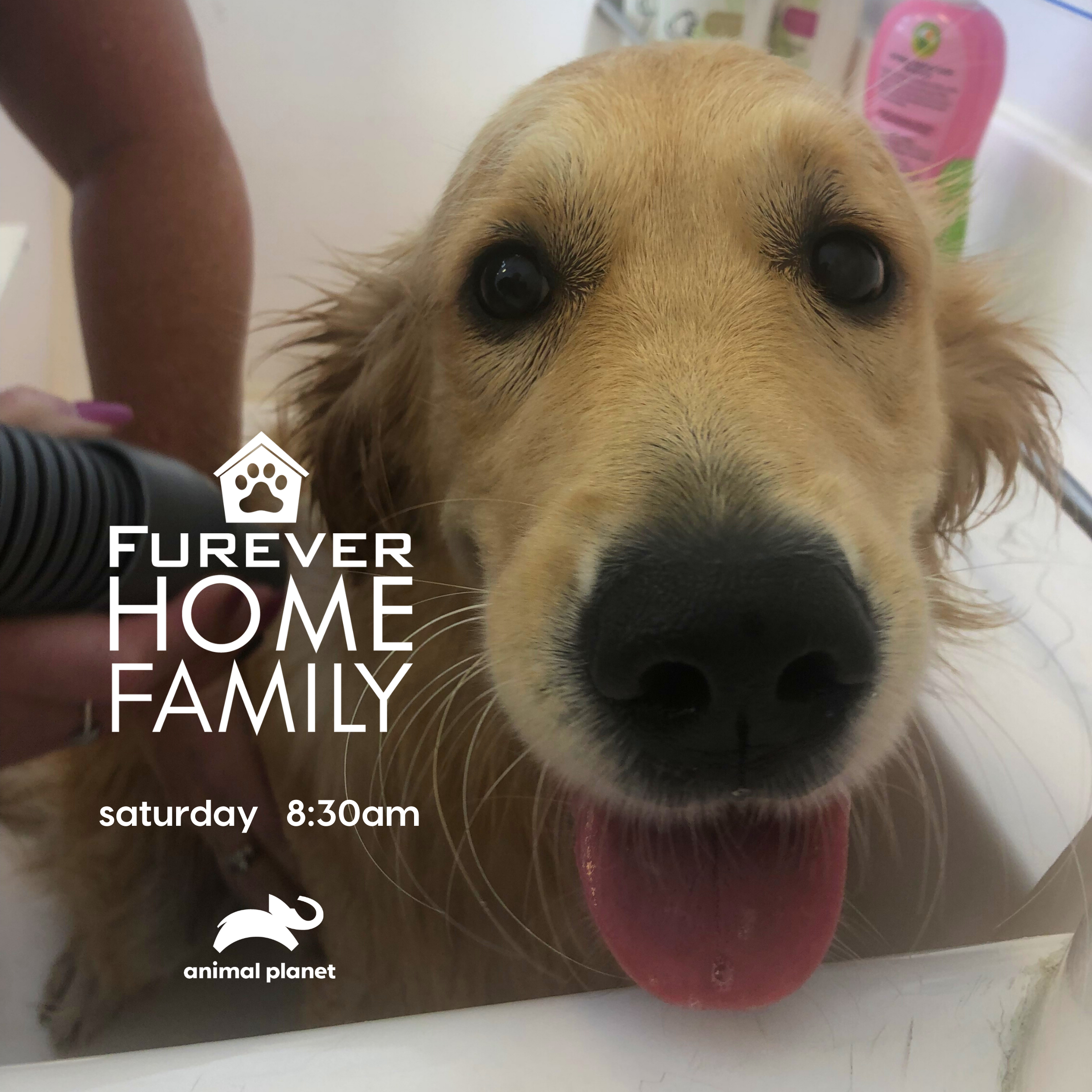 Furever Home Family In 2020 Animal Planet Pet Parent Animals