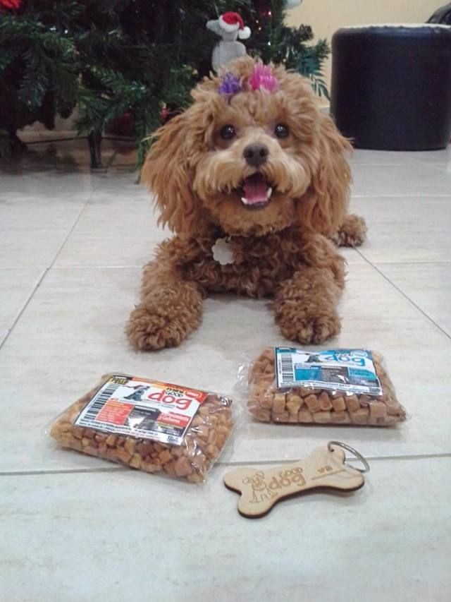 Mily - Habilidad Canina