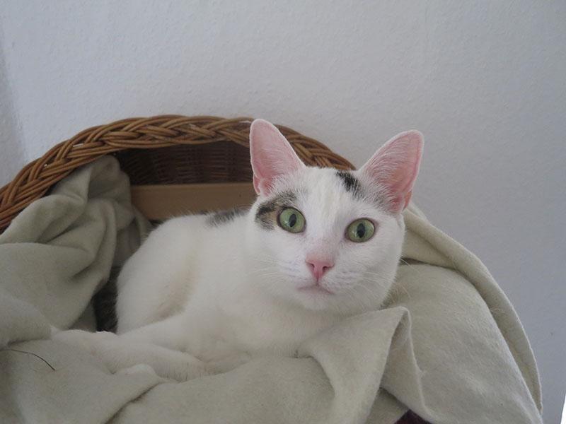 Green eyes. Katze Wohnung flauschig Katzen, Flauschig