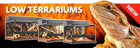 "Our Brand New Low Terrariums 12"" available in 3 sizes"