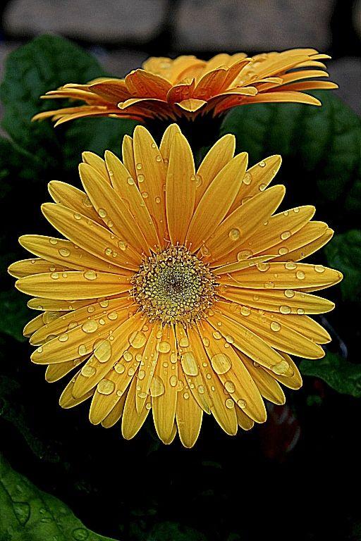 Youtube Channel Https Www Youtube Com User Thefederic777 Facebook Https Www Facebook Com Gardenflowe Flowers Nature Happy Flowers Yellow Flowers