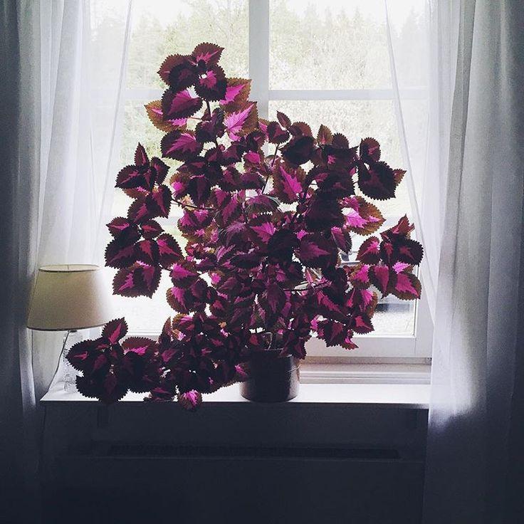 Bildresultat för palettblad china rose