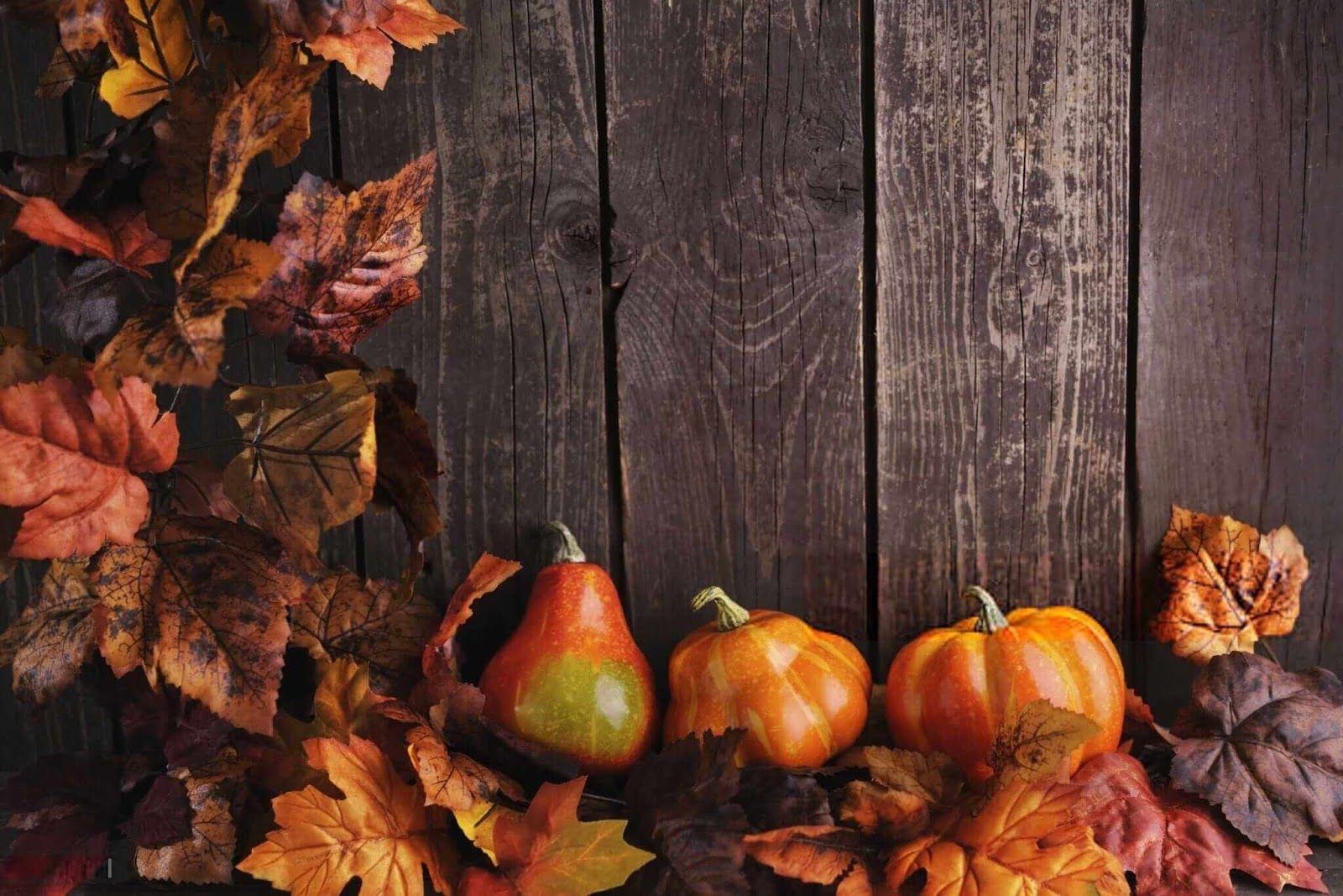Pin On Thanksgiving Wallpaper