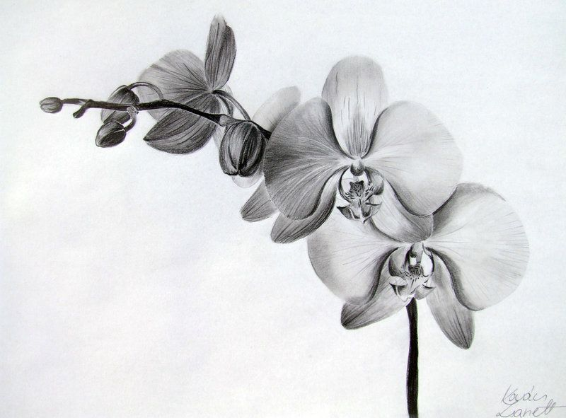Orchid By Zeroxy92 On Deviantart Black And White Flower Tattoo Orchid Flower Tattoos Orchid Tattoo