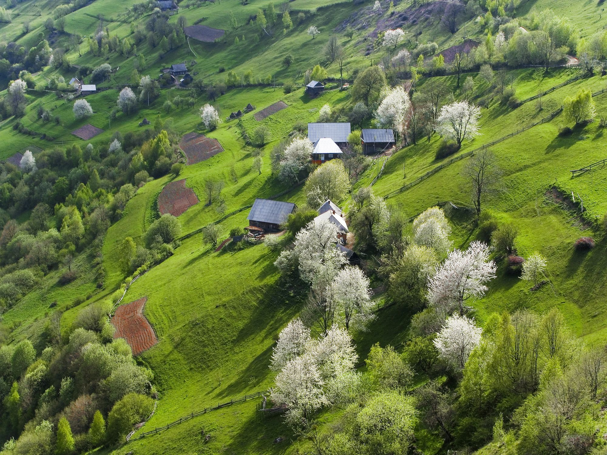 Transylvanian spring by munteanu adrian