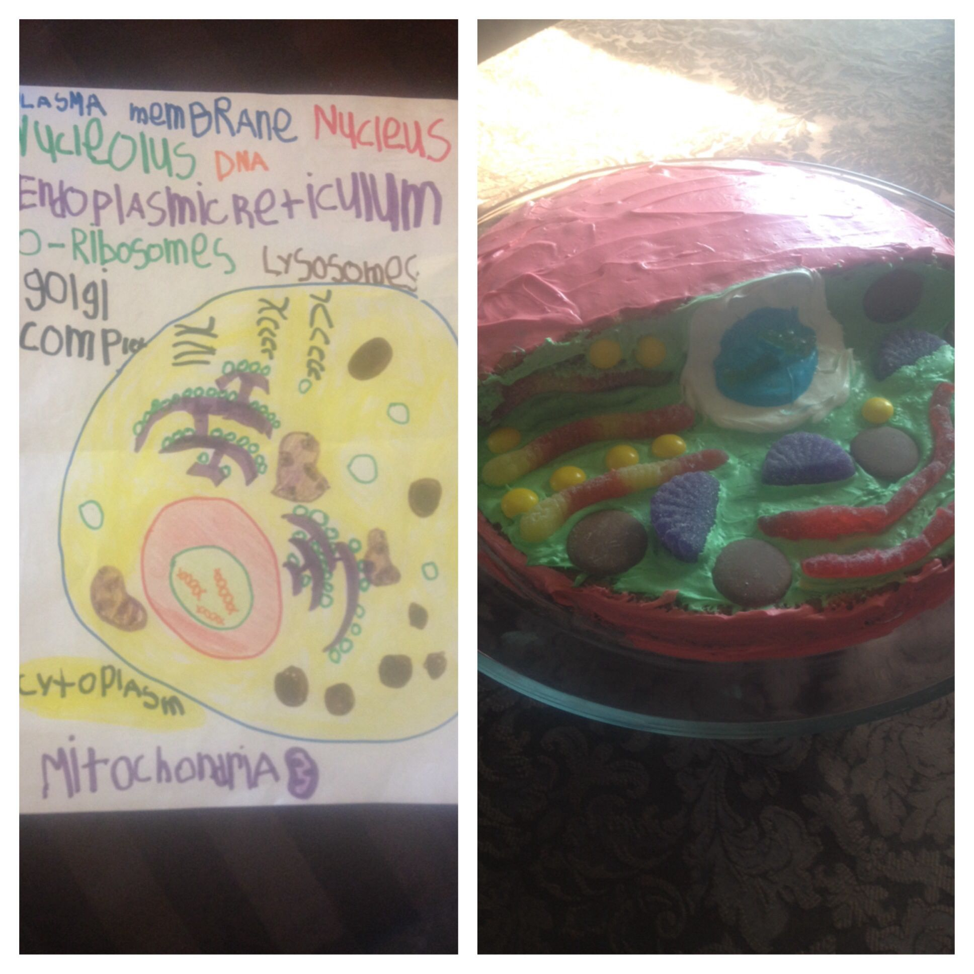 3d animal cell cake and diagram by 6 year old zoology fourth grade 3d animal cell cake and diagram by 6 year old ccuart Choice Image