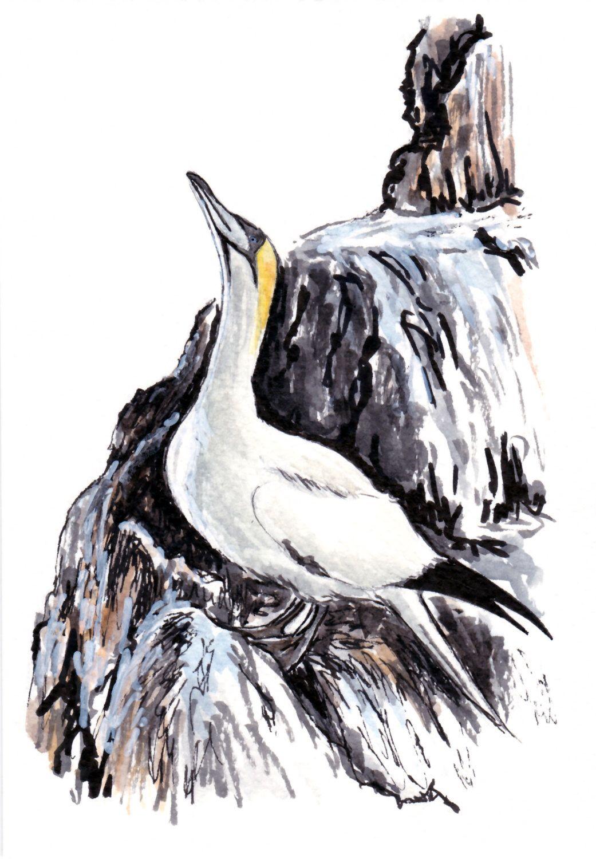 Pin on oiseaux bretons