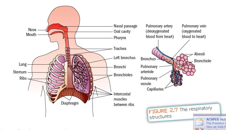 respiratory system on pinterest