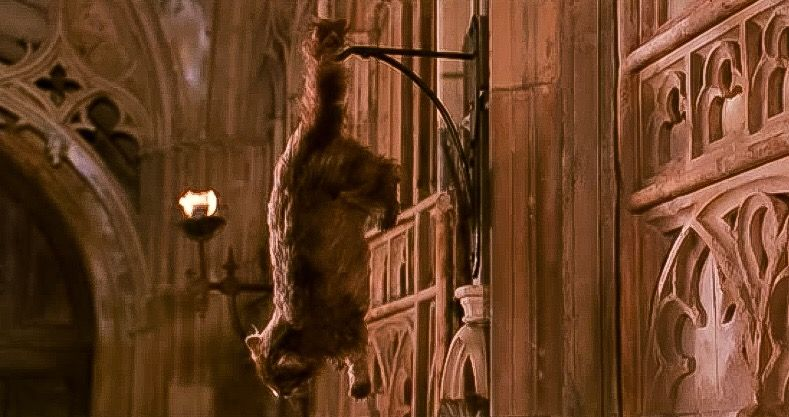 Harry Potter And The Chamber Of Secrets Hogwarts Poor Mrs Norris Has Been Petrified