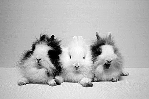 Some adorable bunnies!