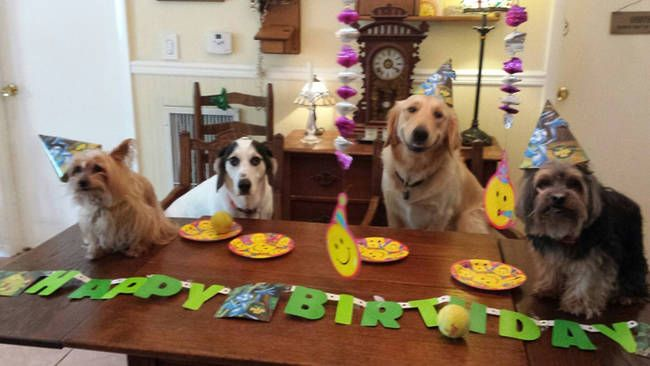 Cute Dogs Celebrating Birthdays Party Pet Dog Owners Will Be Fascinated To See The List Of Dogs Show Dog Birthday Happy Birthday Quotes Funny What Kind Of Dog