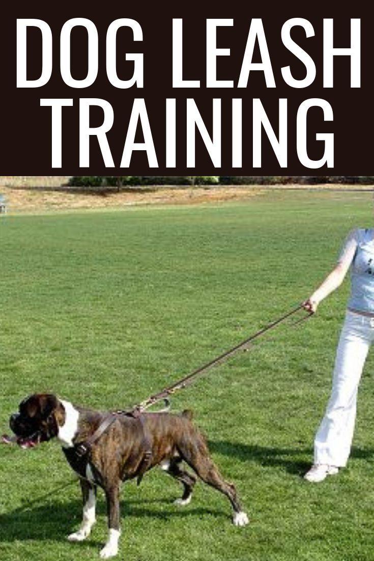 Dog Leash Training Dog Leash Holder Paracord Dog Leashes Diy
