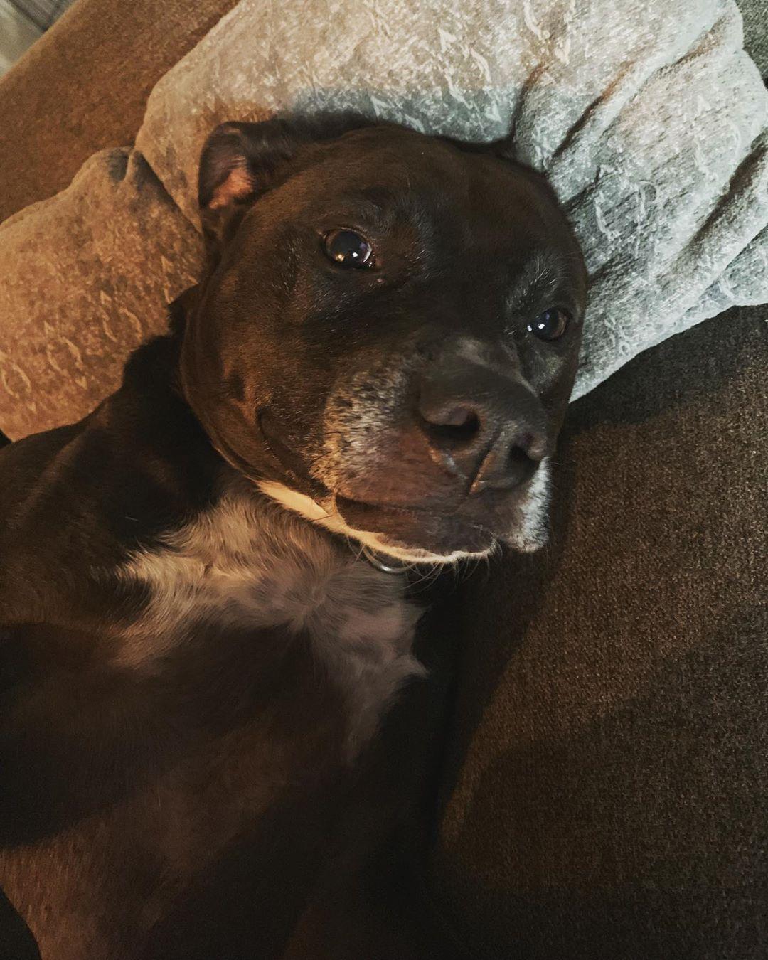 Pitbull puppy rescue bay area