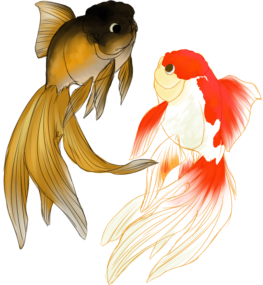 Lovely oranda art goldfish koi art pinterest for Koi und goldfisch