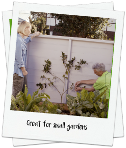 Fruit trees for small spaces video - Palmers Garden Centre http://www.palmers.co.nz/secrets-garden-success/space-savers-fruit-trees-for-small-gardens/