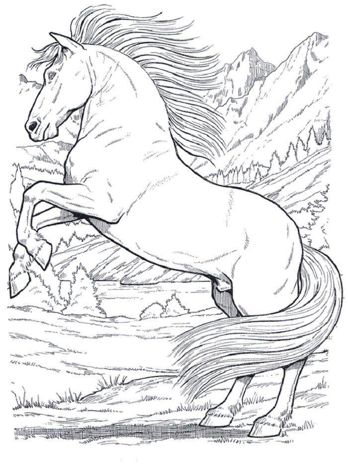 Ausmalbilder Pferde Gratis 4 Pferd Ausmalbilder Pinterest