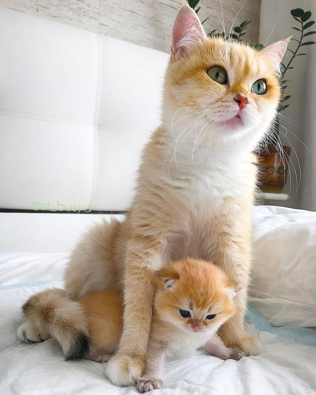 Please Don T Breed Or Buy While Shelter Animals Die Always Adopt Never Shop And Please Support Your Local Shelters Kittens Cutest Cute Cats Cute Cats Photos