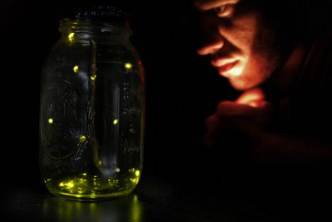 fireflies increas LEDS by 55%