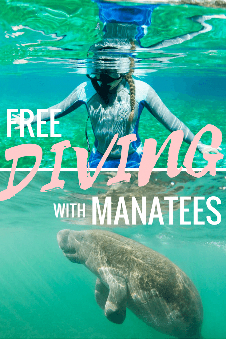 Free Diving With Manatees #divingboarddiy (With Images