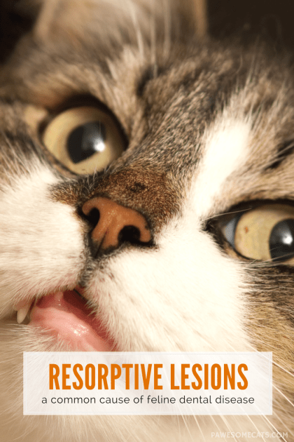 Holey Teeth, Catman! Resorptive Lesions and Your Cat
