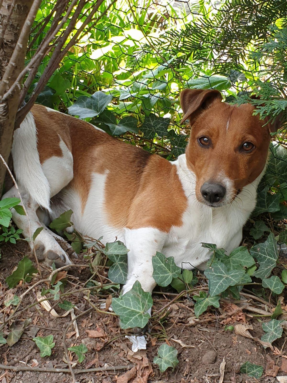 Hunde Foto Wally Und Pino Mister Lover Hier Dein Bild Hochladen