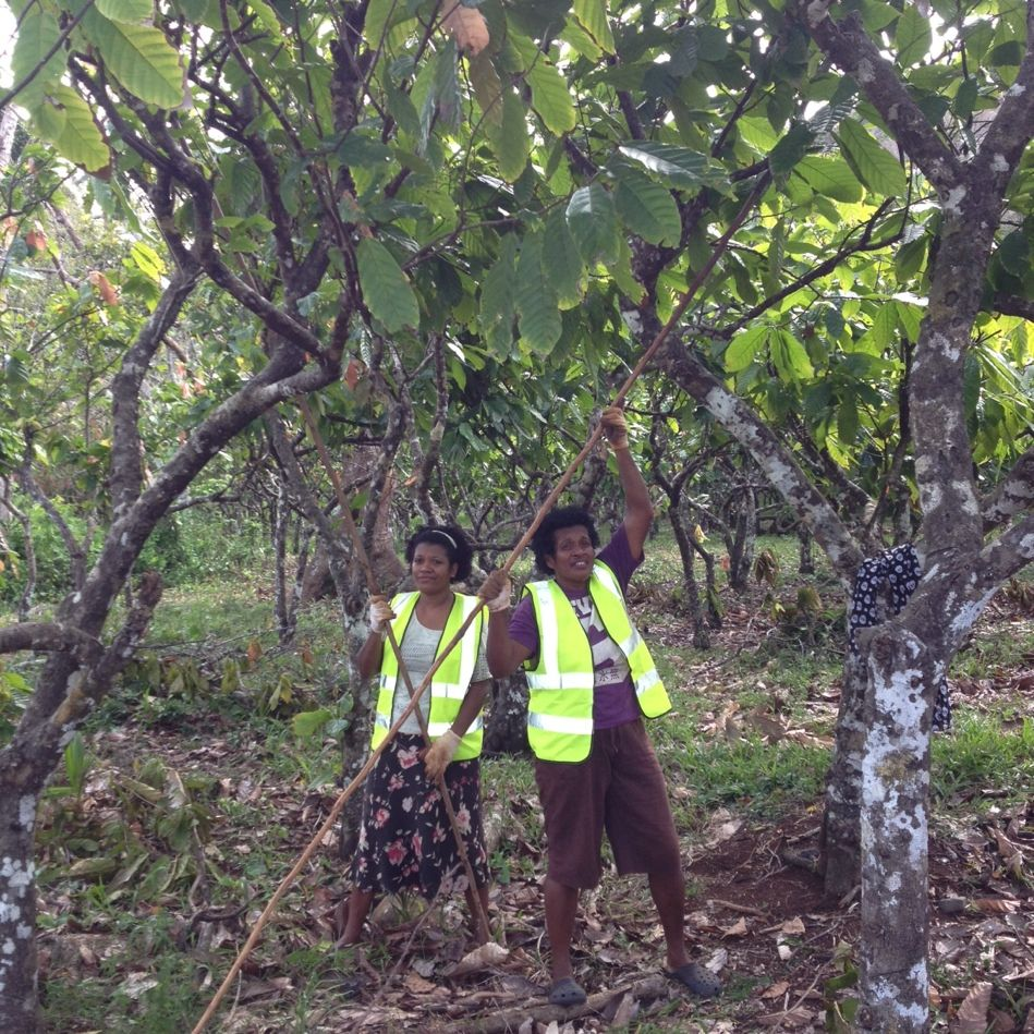 #Cacaofiji women on the weekly hunt for cocoa pods #empoweringfijiwomen
