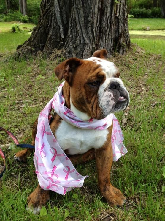 Some Bully S Go Out And Sniff The Trees Bogey Prefers To Sit And