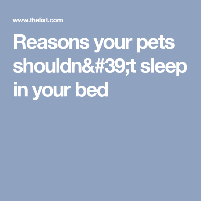 Reasons your pets shouldn't sleep in your bed