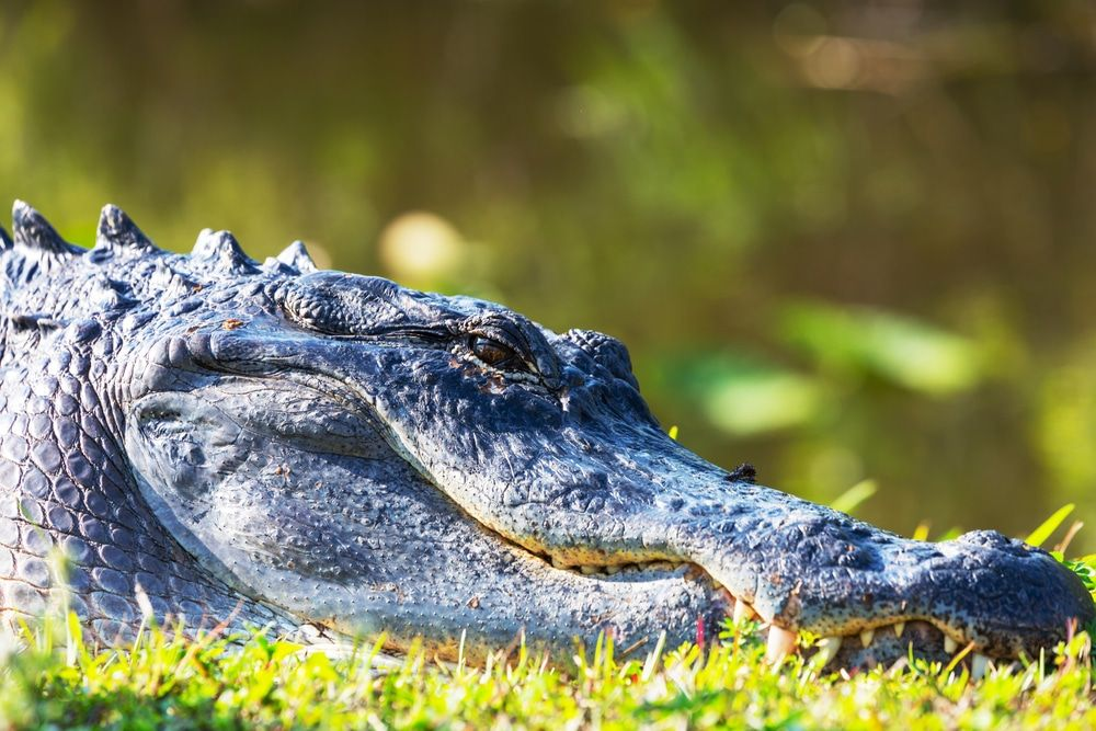15 Best Everglades Airboat Tours The Crazy Tourist