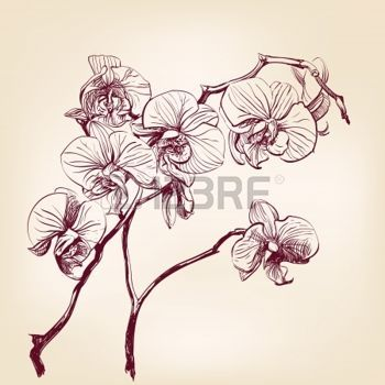orchidee floralen orchideen hand gezeichnet illustration flowerpaintings pinterest h nde. Black Bedroom Furniture Sets. Home Design Ideas