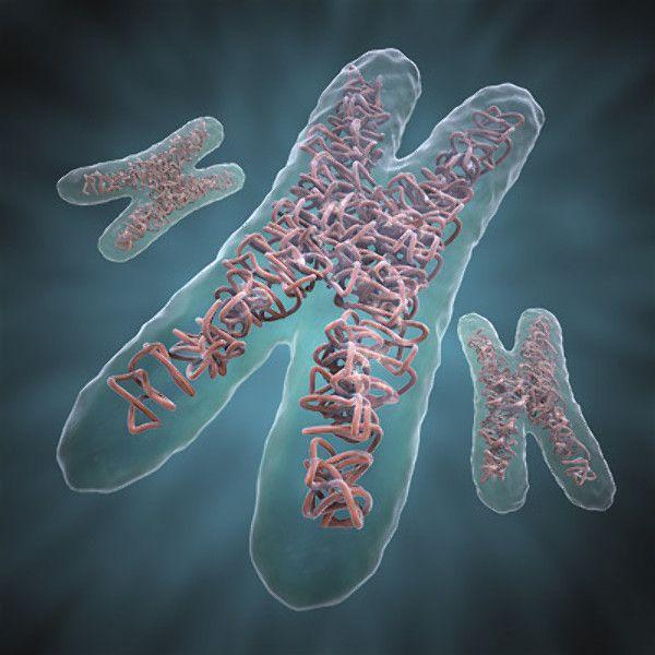 Image Result For Chromosome 3d Model Dna Chromosomes