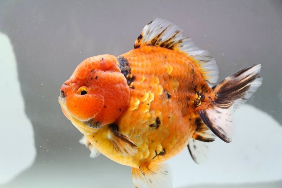 Pin On Fish Keeping