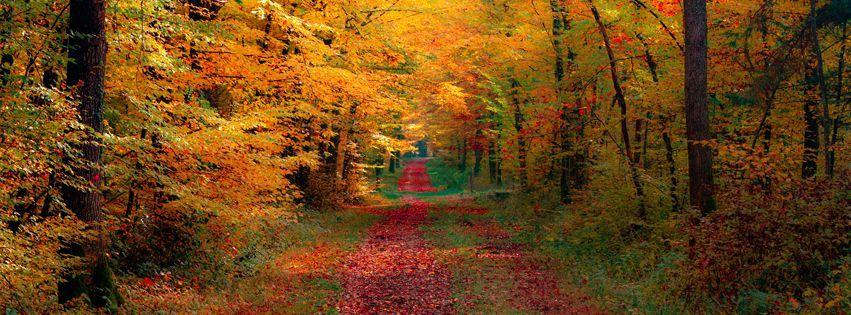 Free Fall Facebook Covers: Autumn Leaf Fall Facebook Cover Free Fb Cover Photos