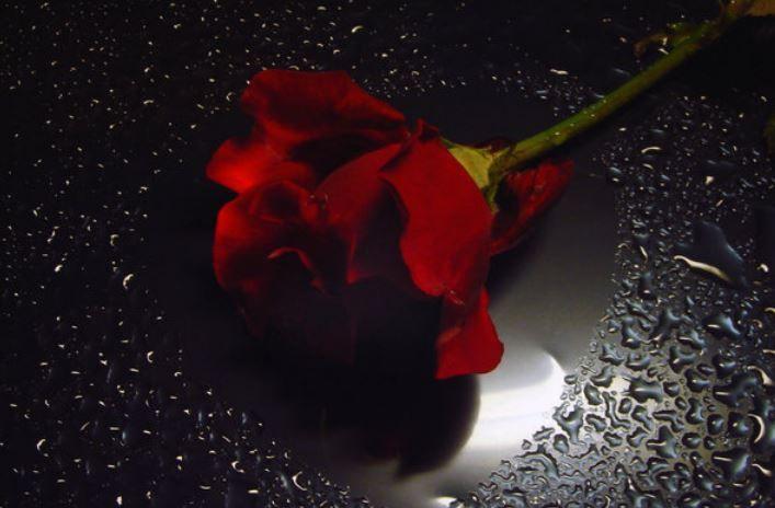 خلفيات ورد احمر بحث Google Red Roses Flowers Black Background Black And Red Roses