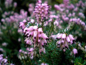 plantas medicinales para el acido urico