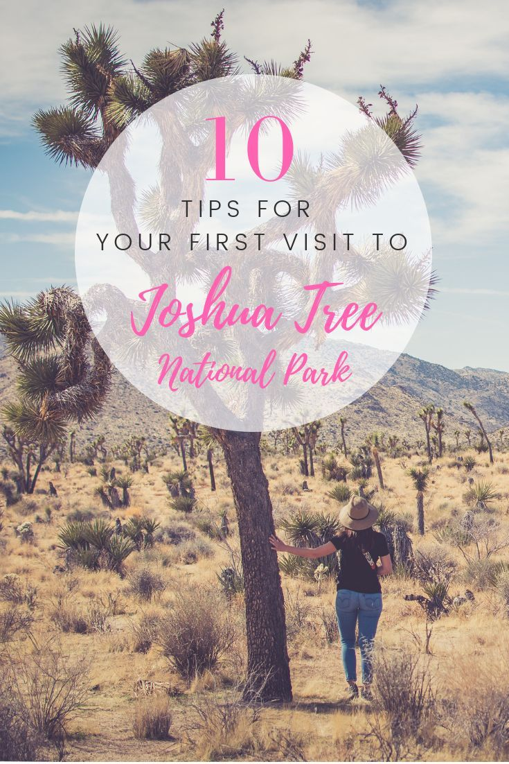 10 Tips for Visiting Joshua Tree National Park - #Joshua