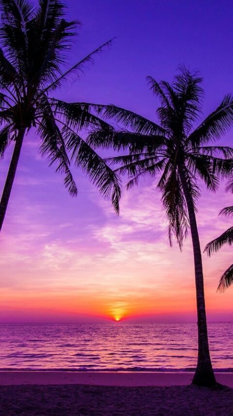 beach, palm trees, and sunset image #Beachsunsetillustration