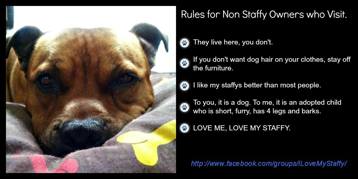 Staffy rules. Staffordshire bull terrier quotes, English