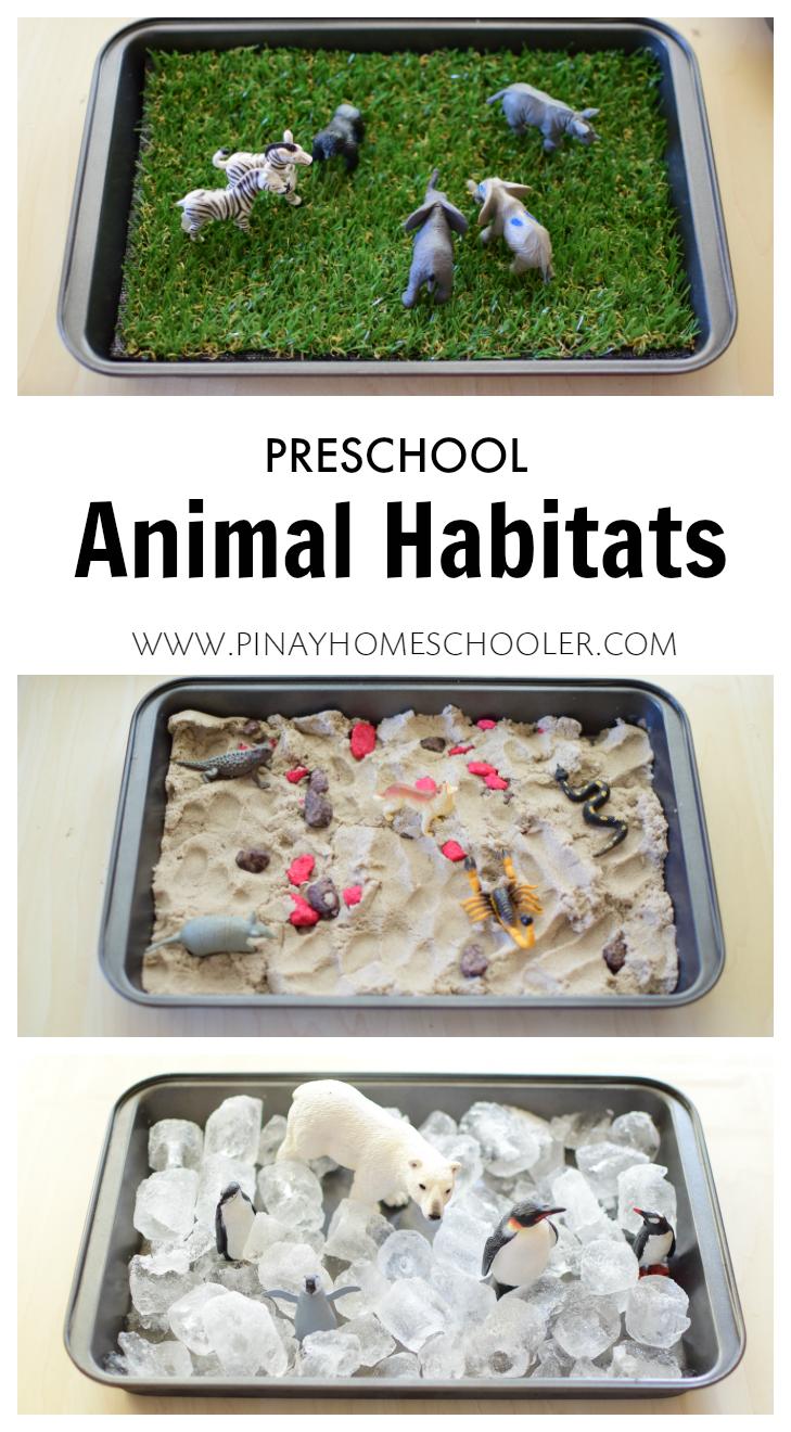 preschool animal habitats using sensorial materials montessori ideas preschool science. Black Bedroom Furniture Sets. Home Design Ideas