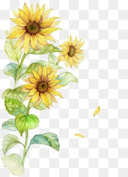 Creative Sunflower Ink Sunflower Yellow Flowers Flowers Flowers Illustration Creative Sunflower Ink Watercolor Sunflower Yellow Flowers Painting Sunflower Png
