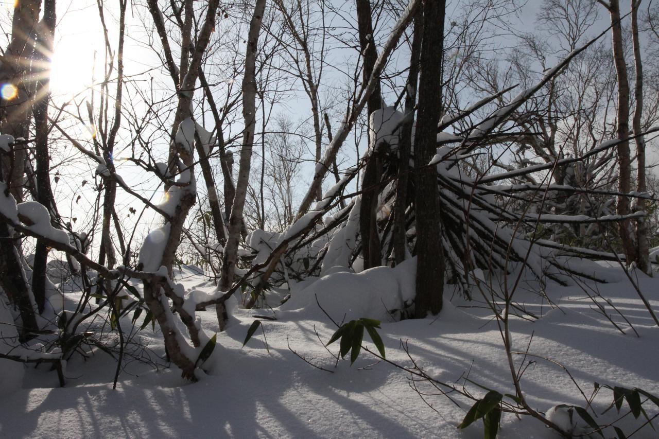 トゲトゲ倒木。
