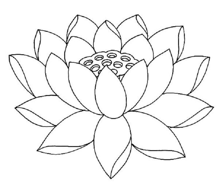 Lotus Flower Coloring Pages Free In 2020 Lotus Flower Drawing