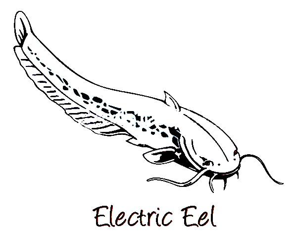 Electric Eel Image Coloring Page Color Luna With Images Eel