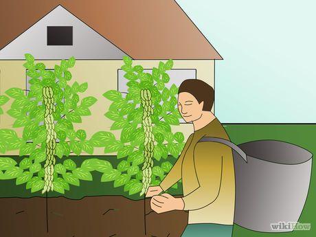 Grow Soybeans Step 9.jpg