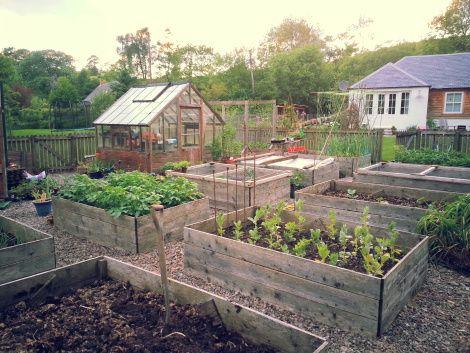 the scottish country garden my veg garden featured on the garlic sapphire blog